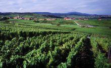 séminaire vignobles Alsace