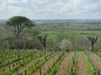 séminaire vignobles Bordelais